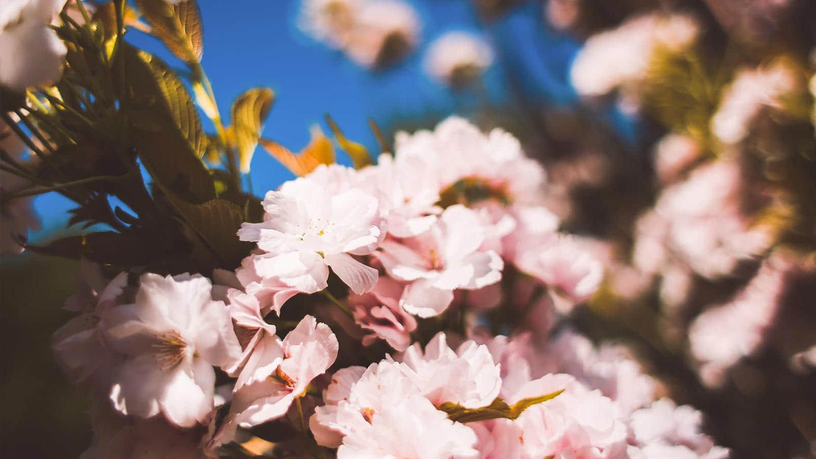 Mix Variety Flower Arrangement